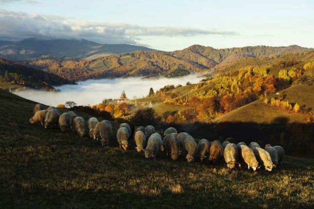 Photography in Romania