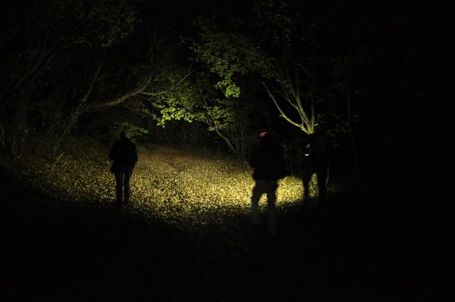 Exploring the darkness of the Hoia-Baciu Forest