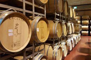 Lacerta wine cellar