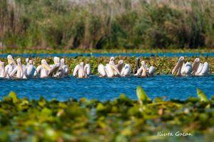 Danube Delta trip