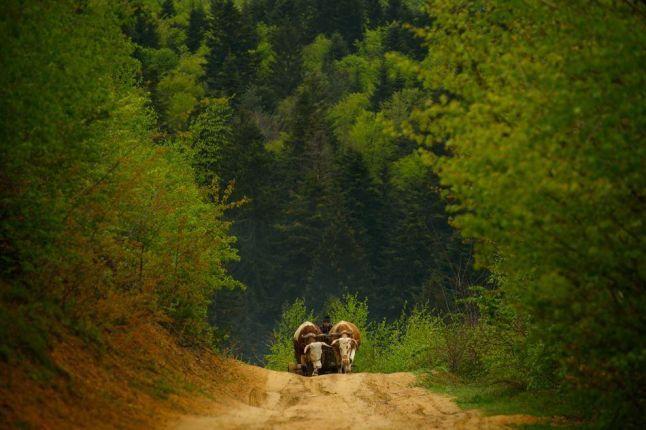 The beautiful Romanian countryside