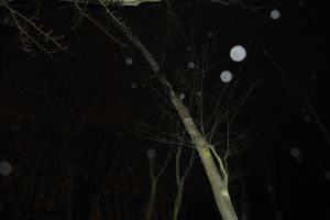 Bizarre orbs and crying trees