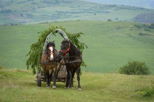 Horse cart ride on the surrounding hllls