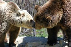 Day 1: Libearty Bear Sanctuary & Piatra Craiului Natural Park
