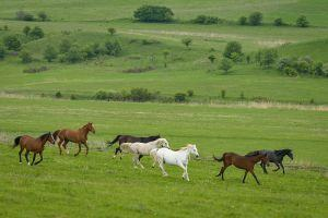 Our livery horses