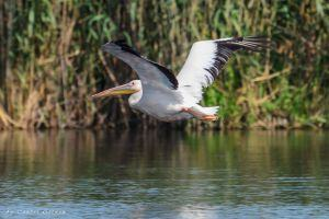 [Tour customisation] Spend the 2nd day in the Danube Delta