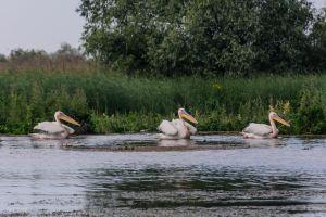 Wildlife Watching & Tracking Trips