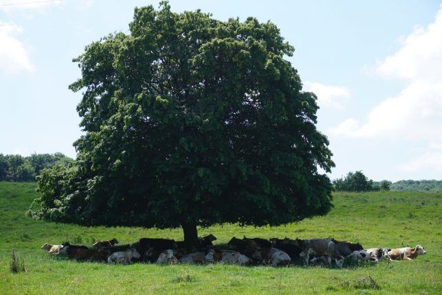 Transylvania countryside
