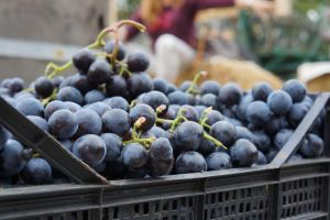 Romanian grapes