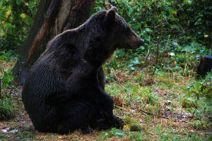 Visit Libearty Bear Sanctuary