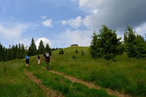 Romanian Adventures & Wildlife Tours
