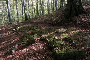 Visit to the Dacian fortress 'Piatra Rosie'
