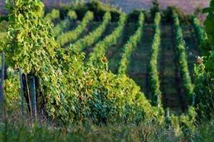 Wine tasting trip Transylvania