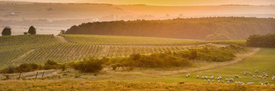 Wine and food Transylvania