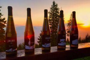 Wine tasting tour Transylvania