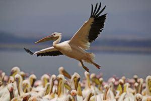 Birdwatching Danube Delta tour