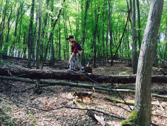 Wildlife tracking in Romania
