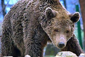 Optional for Day 2:  Libearty Bear Sanctuary & Rasnov Citadel