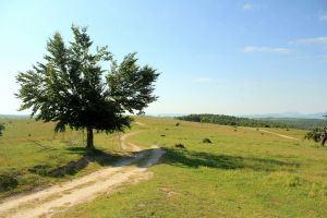 Countryside near Cluj